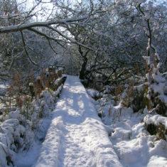 Snowy day | Margaret