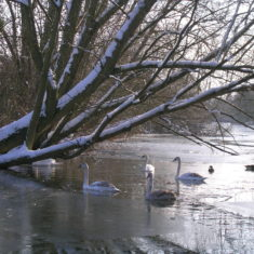 Lake in the Park | Margaret