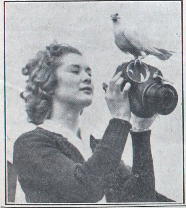 What does the dove think? | Dinah Sheridan