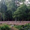 Sherrardspark Wood