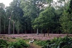 Sherrardspark Wood | Welwyn Hatfield Borough Council