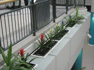 Red, white and blue plants in the Howard Center | Robert Gill