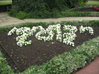 London 2012 floral display on The Campus | Robert Gill