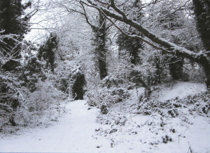 Digswell Bridal Path On A Snowy Day - My favourite place in WGC | Nara