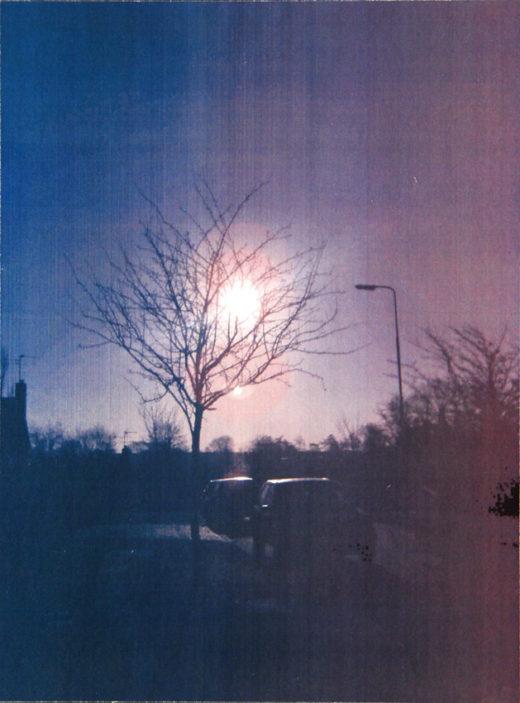 Viaduct Tree - My neighbourhood | Samantha P