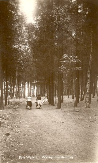 Sherrads Wood in Welwyn Garden City | Hertfordshire Archives and Local Studies