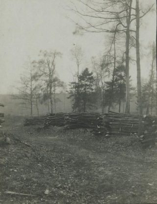 Cut timber in Sherrardswood 1919 | Campus West Library