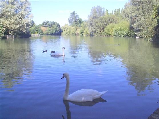Stanborough Lake | Diane Faulkner