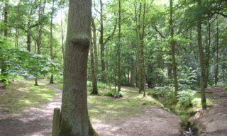 Brocks Wood in the summer | J McCann