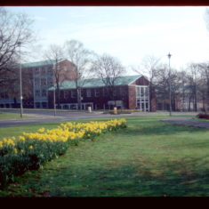 Another view of De Havilland College, framed by the Campus West golden daffodils.