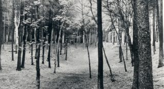 The Dell setting | Hertfordshire Archives and Local Studies
